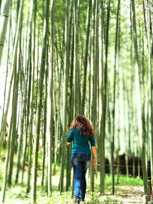 Arashiyama. Bosque de bambú en Kyoto