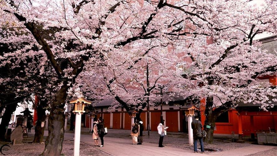 Sakura-en-Tokyo