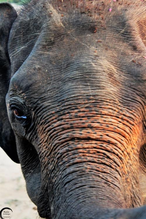 Elefante en Udawalawe