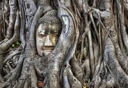 Cabeza de Buda en árbol (Ayutthaya) (Tailandia)WEB