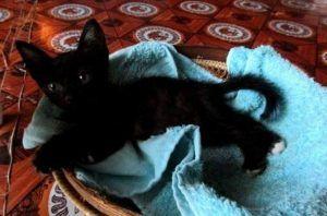 Mi gato en su nueva casa