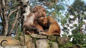 Templo de los monos (Swayambhunath)