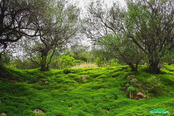 Rincones de España: el Barranco de los Cernícalos