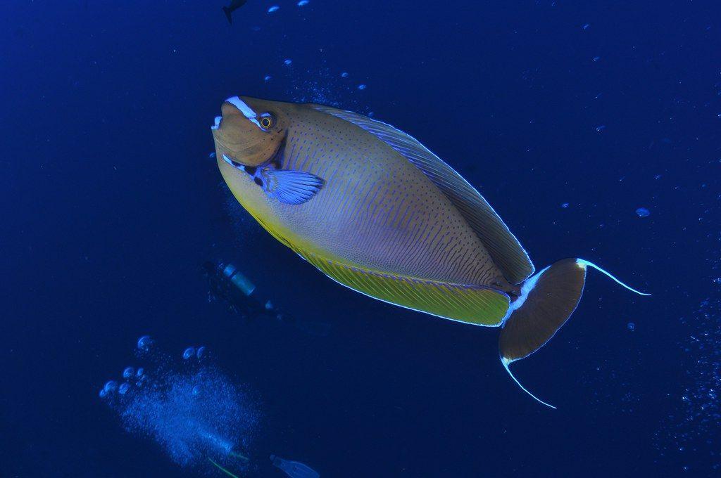 Cosas que hacer en la Costa Brava. Bucear en las Islas Medas. Foto: jome jome
