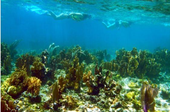 Islas de Cuba. Cayo Coco. Buceo